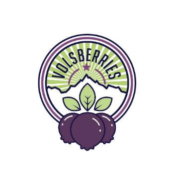 Vols Blueberries
