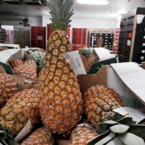Ananas pain de sucre du Bénin