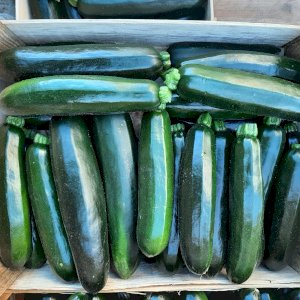 courgette pays bio