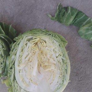 Fresh Cabbage from Uzbekistan