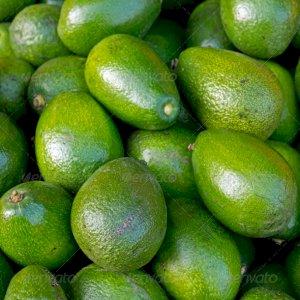 fresh avocado fruits for sale