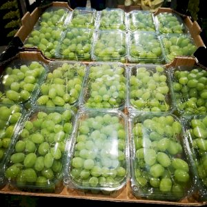 Grapes Thompson Seedless