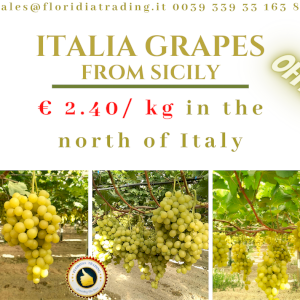 ITALIA GRAPES from Sicily