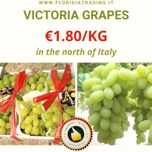 GRAPES FROM SICILY - VICTORIA
