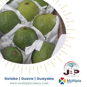 Guava | Guayaba | Goiaba