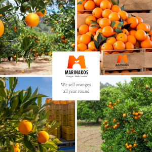 Valencia oranges from sunshine Skala Laconia,