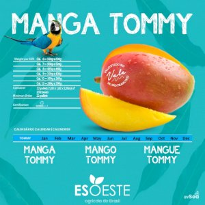 Mangoes Tommy