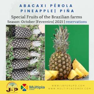Pineapple | Pina | Abacaxi Pérola