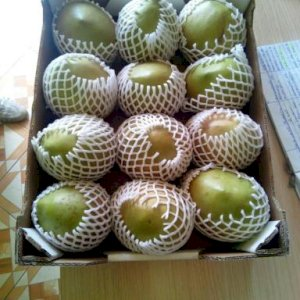 Fresh Apple mangoes