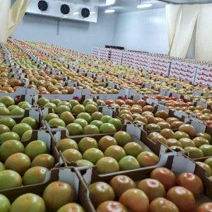 Export fruit légumes