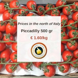 Piccadilly Tomato 500 gr