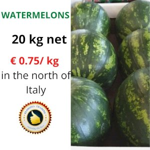 WATERMELON FROM ITALY