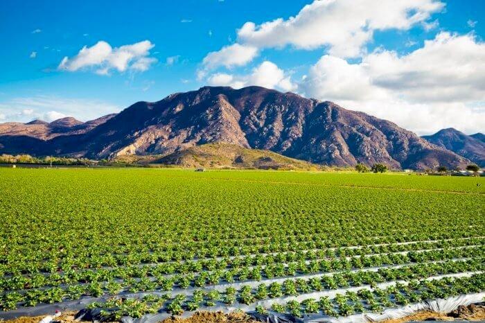 AgTech & Foodtech en Californie