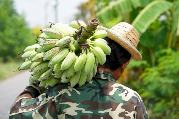 La nouvelle Guerre de la Banane ?