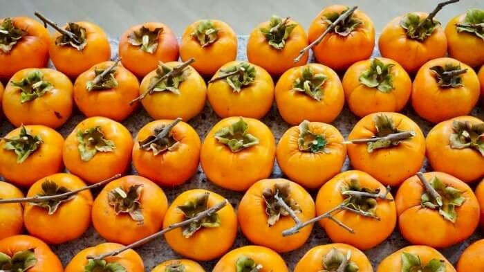 Kaki (persimmon), a look back at last season