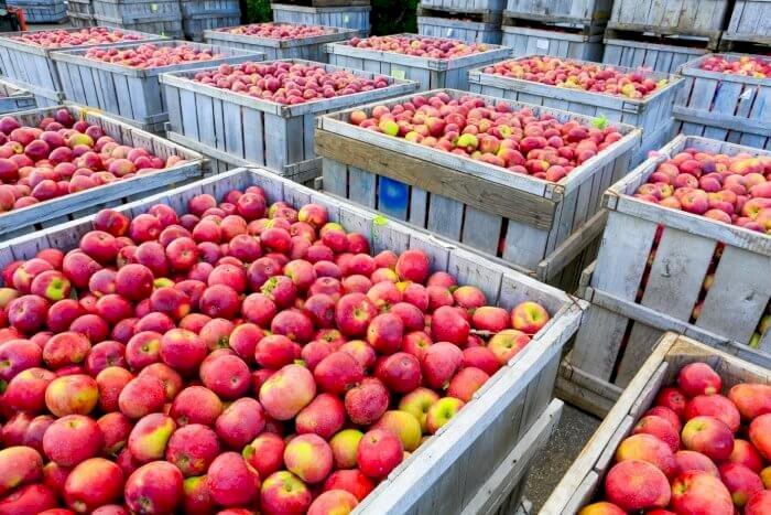 Pomme : marché mondial