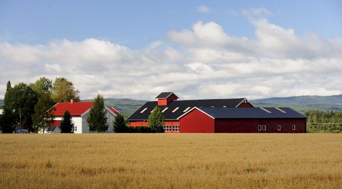 Réchauffement: Du blé au pays du Père Noël. La Finlande, future grande céréalière ?