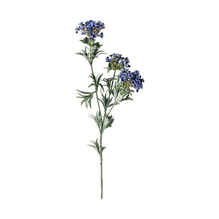 Alyssum Flower