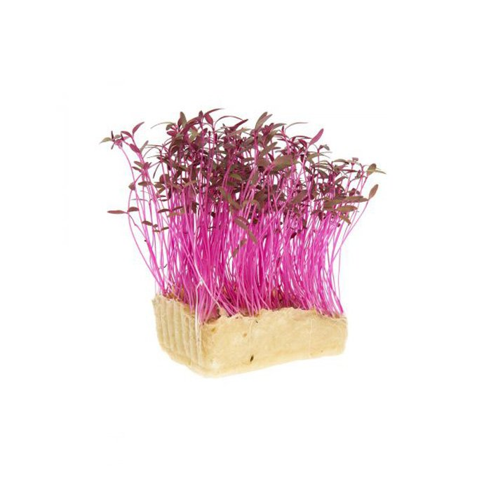 Amaranth Cress
