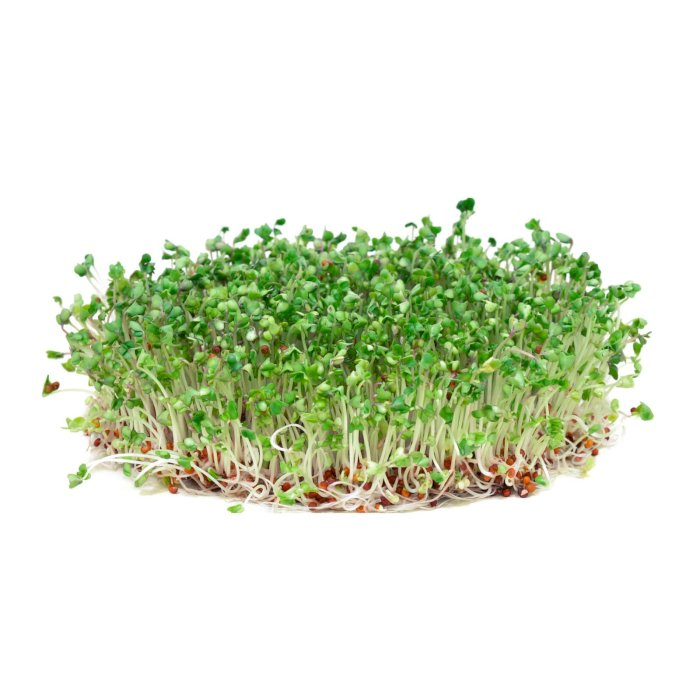Broccoli Cress