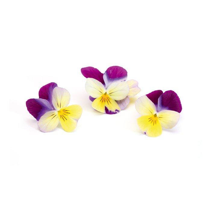 Cornabria Blossom