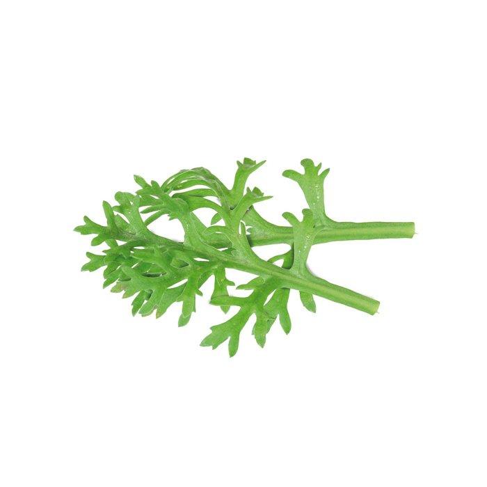 Kikuna Leaves