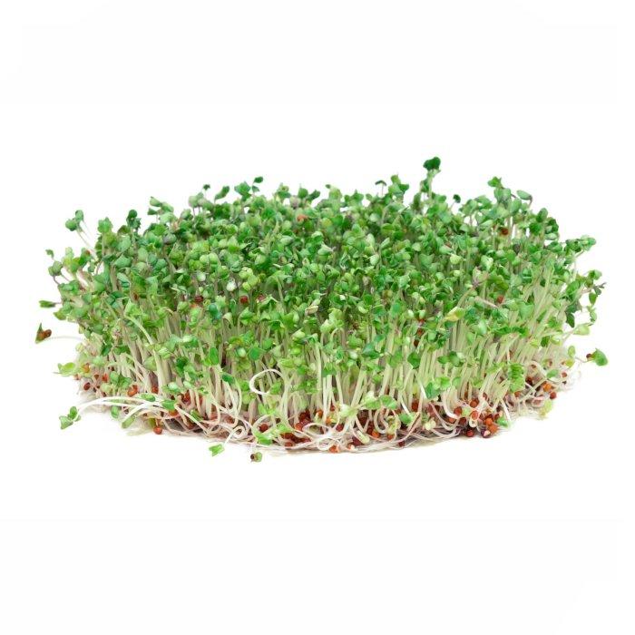Brocoli Sprouts