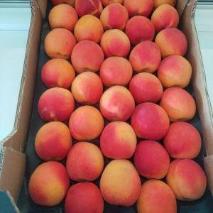 Apricot Lady Cot
