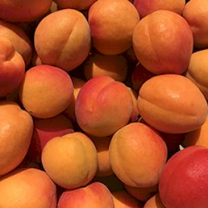 Apricot Robada