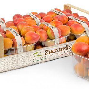 Apricot Orange Type