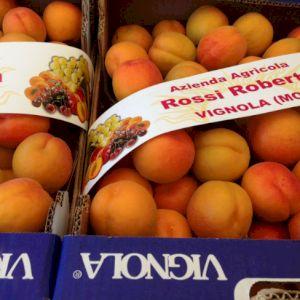 Apricot Red Orange Type