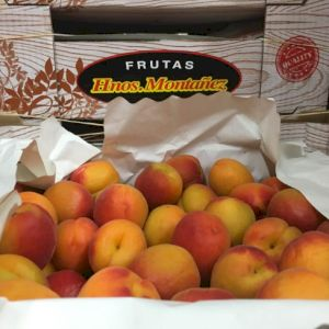 Apricot Red Type
