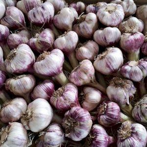 Garlic Fresh New