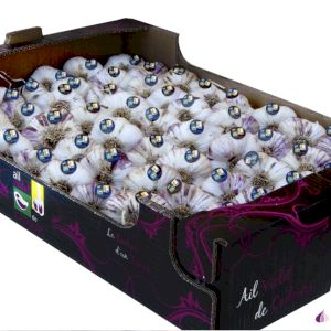 Garlic Purple