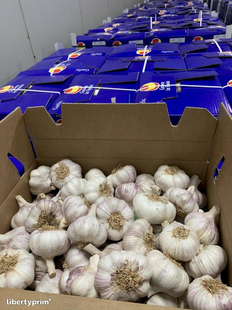 Garlic Red Class 1 Spain Exporter - SybarisMarket | Libertyprim