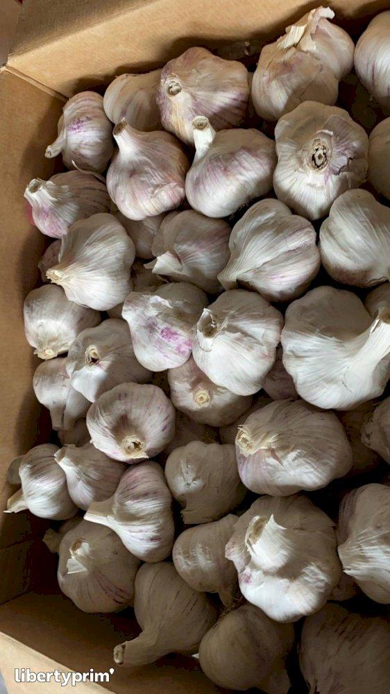 Garlic Purple Class 1 Spain Exporter - SybarisMarket | Libertyprim