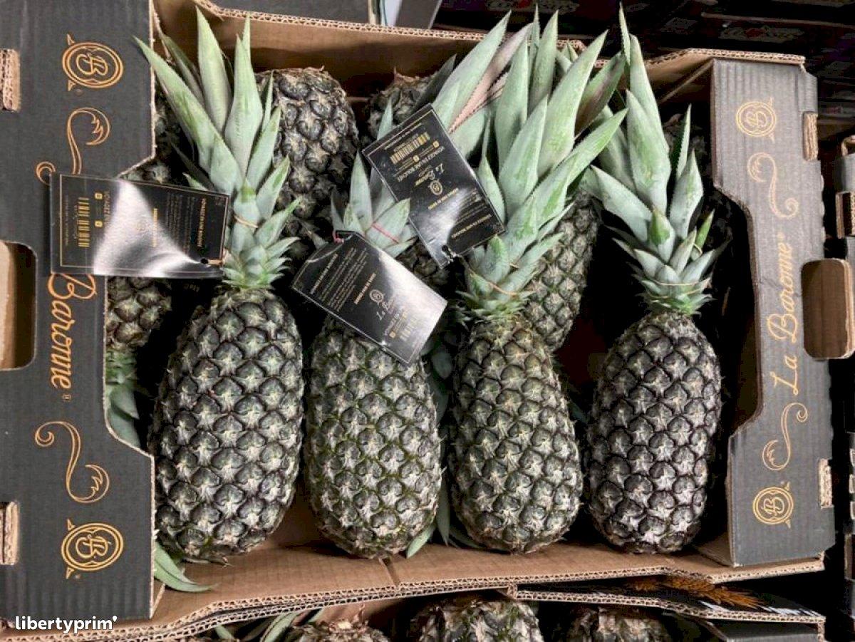 Pineapple Sugarloaf Class 1 Ghana Importer - LA-BARONNE | Libertyprim