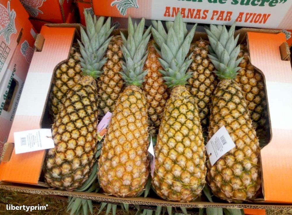 Pineapple Sugarloaf Class 1 Benin Conventional Grower - COSTABENIN | Libertyprim