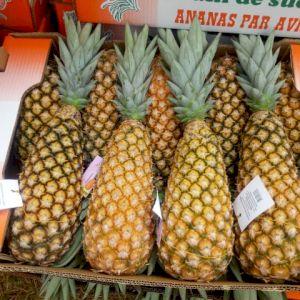 Pineapple Sugarloaf