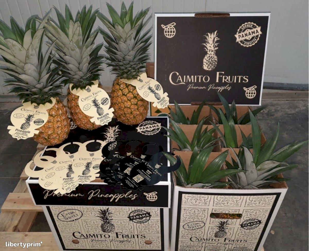 Ananas Sweet Extra Panama Producteur Conventionnel - Peruzzo | Libertyprim