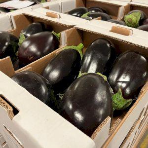 Eggplant Half Round