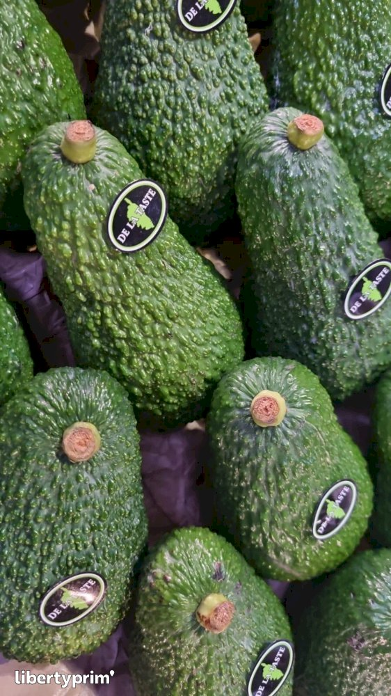 Avocado Italy Conventional Grower - Peruzzo | Libertyprim
