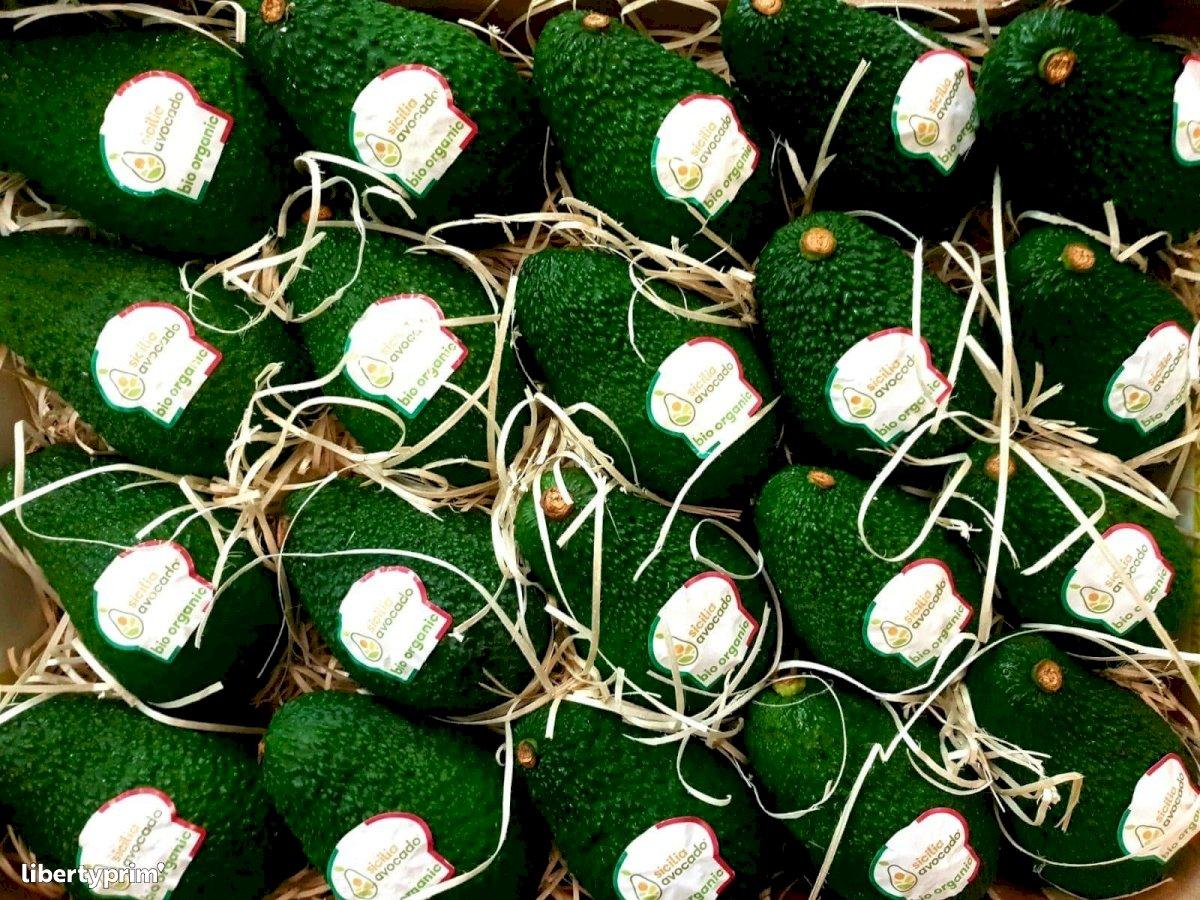 Avocado Italy Conventional Grower - Peruzzo   Libertyprim