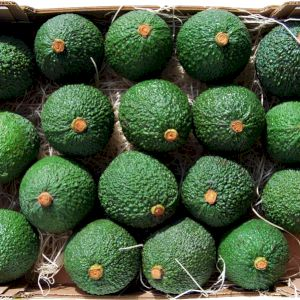 Avocado Orotova