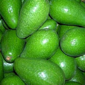 Avocado Zutano