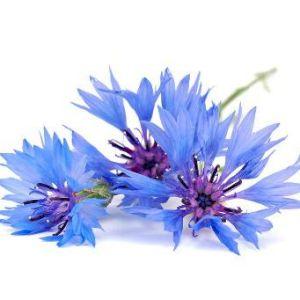 Cornflower (flower)