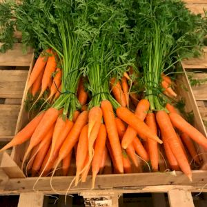 Carrot Fane
