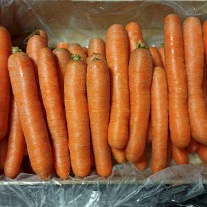Carrot Nantaise