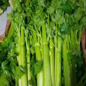 Celery Green