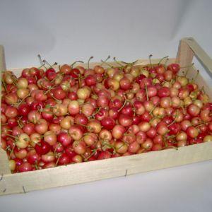 Cherry Primegiante